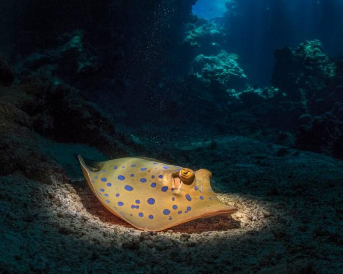 fishinfocus, Scuba Travel, Red Sea