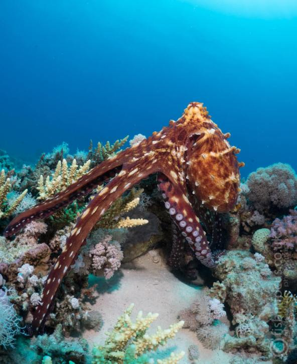 ScubaTravel, fishinfocus, octopus