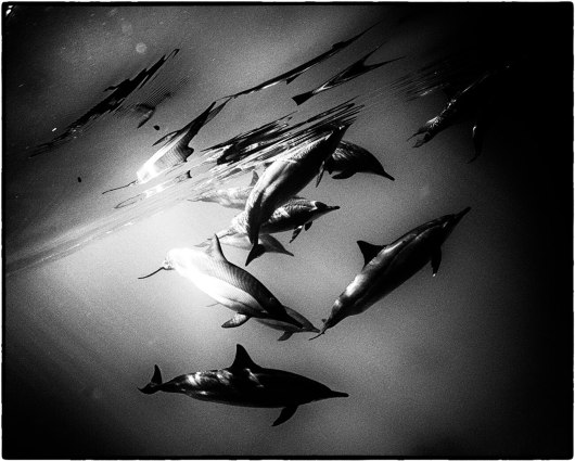 fishinfocus, Scuba Travel, underwater photography,