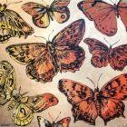 butterflies2main-140x140.jpg