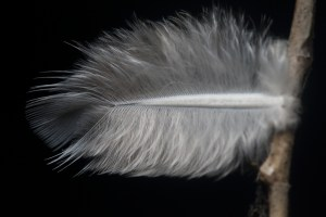 Feather - Birds have these