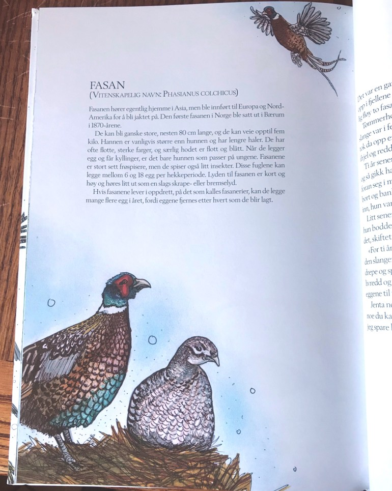 Bird Facts and Stories From Around The World - Ring-necked Pheasant