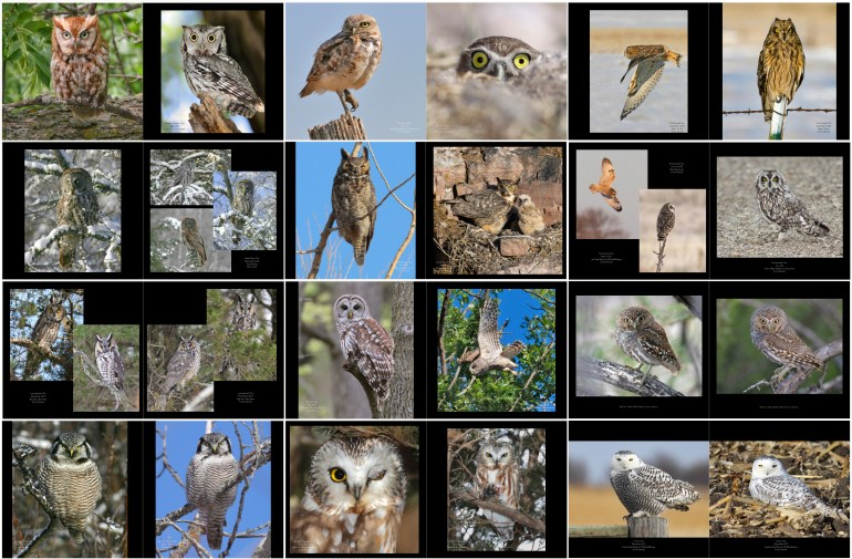 Owl Photobook  Photography by Terry Sohl