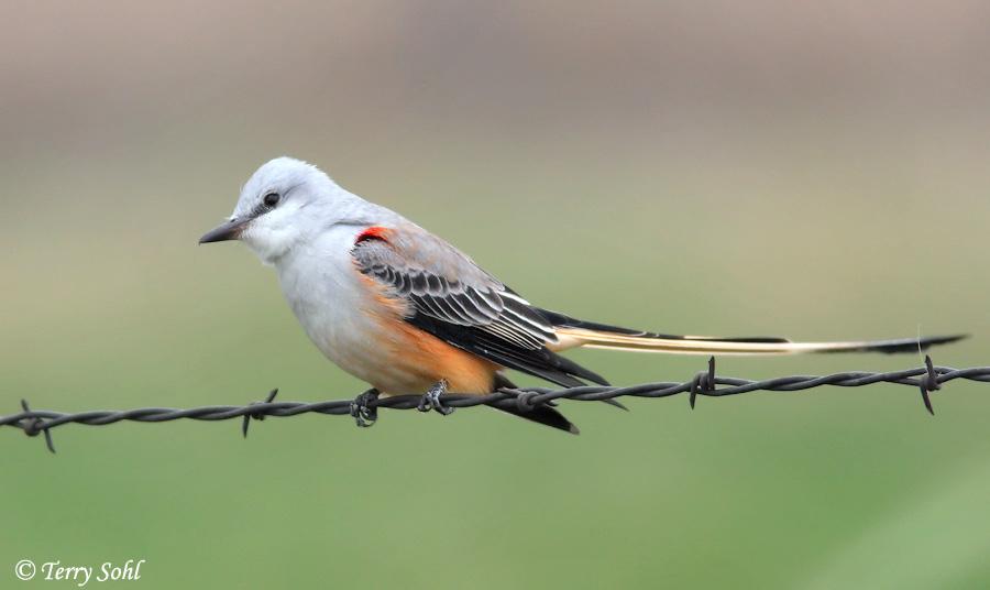Audubon Bird Identification Guide