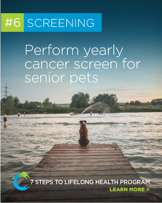 7 Steps to Lifelong Health Step 6 Cancer Screening for Senior Dogs