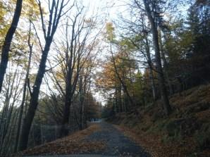 Silnice Kytlice - Chřibská