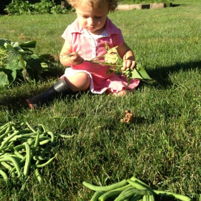 Reaping The Benefits Of Our Garden- Green Beans