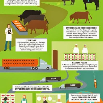 Wordless Wednesday: The Beef Lifecycle