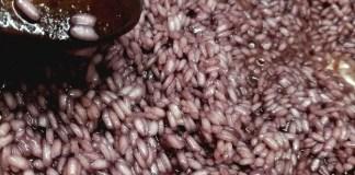 Risotto al vino rosso Ghemme DOCG
