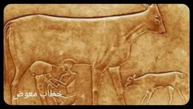"""صورة البقرة التي تبكي """"مصر منذ 4 آلاف سنة وأكثر"""""""