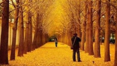 Photo of لا تقلق إنه اكتئاب الخريف
