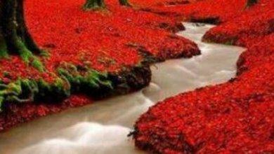 صورة نهر الحب
