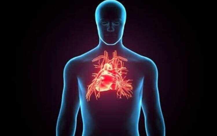 المغنزيوم والأزمات القلبية