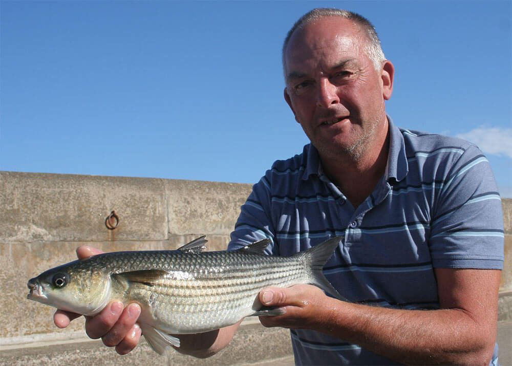 John Avery with a Sark harbour mullet