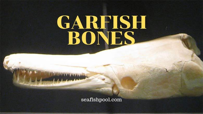 Garfish-Bones