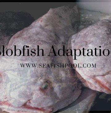 blobfish adaptations