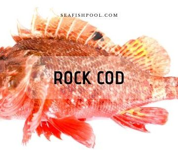 Rock Cod