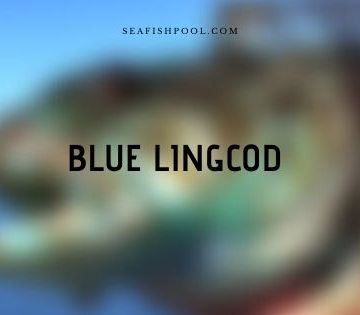 blue lingcod