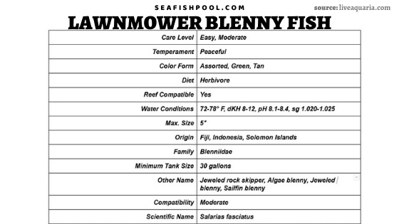lawnmower blenny fish lawnmower blenny algae blenny lawnmower blenny diet lawnmower blenny hair algae lawnmower blenny care algae eating blenny lawnmower blenny reef safe lawnmower blenny food jewel algae blenny sailfin algae blenny rock algae blenny jewelled blenny lawnmower blenny and diamond goby algae blenny food jeweled blenny lawnmower blenny size algae blenny care algae blenny reef safe lawnmower blenny compatibility starry blenny and lawnmower blenny feeding lawnmower blenny lawnmower blenny aggressive lawnmower blenny algae