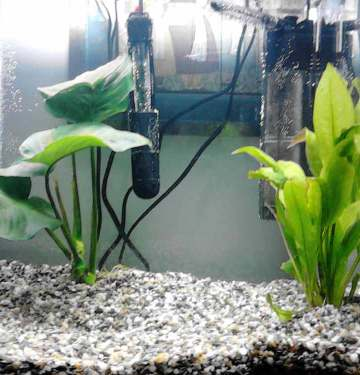 how does a fish tank filter work