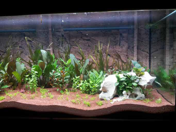 how to keep a fish tank clean
