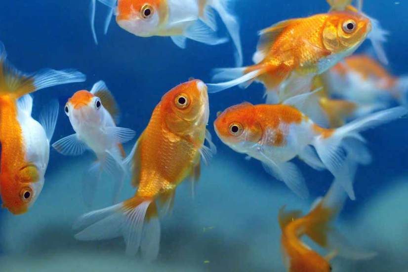 how to select fish for aquarium