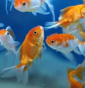 how to select fish for aquarium