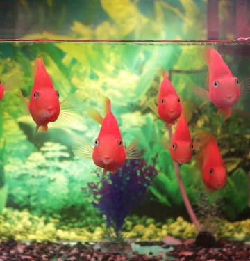 fish tank tips for beginners