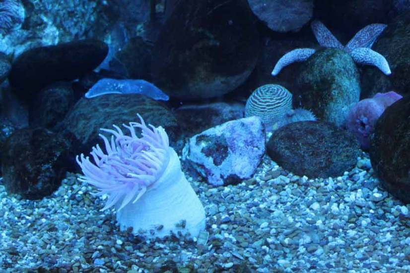 how to maintain a saltwater fish tank