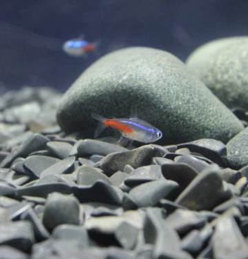 how to set up a new fish tank
