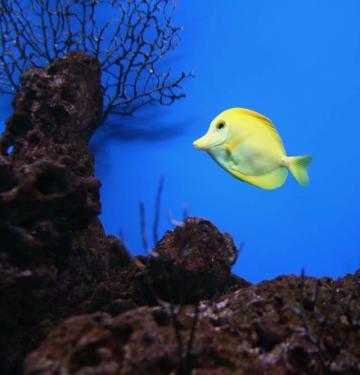 small saltwater fish tank setup