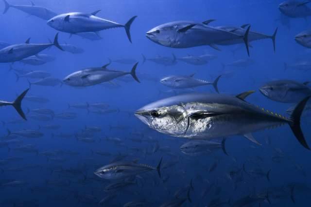 Fish Dependance Day: WWF, fine delle 'scorte' europee, da domani si consuma pesce importato - Seafood