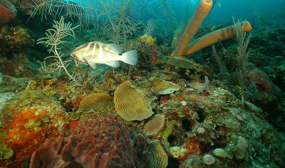 Coral reef shot on SeaLife underwater camera