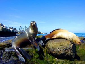 Sea lions shot on SeaLife underwater camera