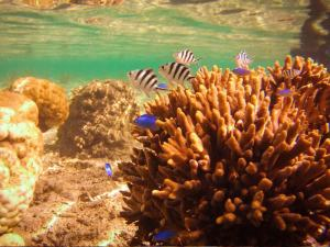 Shot on SeaLife underwater camera