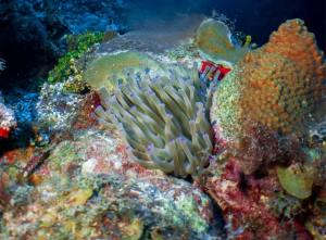 Anemone shot on SeaLife underwater camera