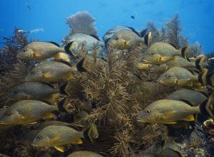 School of fish shot on SeaLife underwater camera