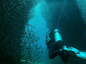 Diver and school of fish shot on SeaLife underwater camera