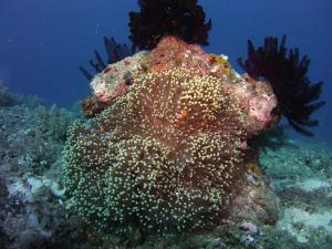 Clownfish shot on SeaLife underwater camera