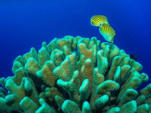 Tobias Friedrich DC2000 SeaLife Underwater Cameras
