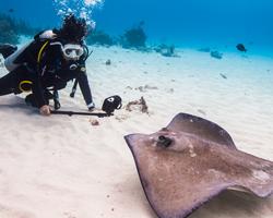 sealife underwater photography