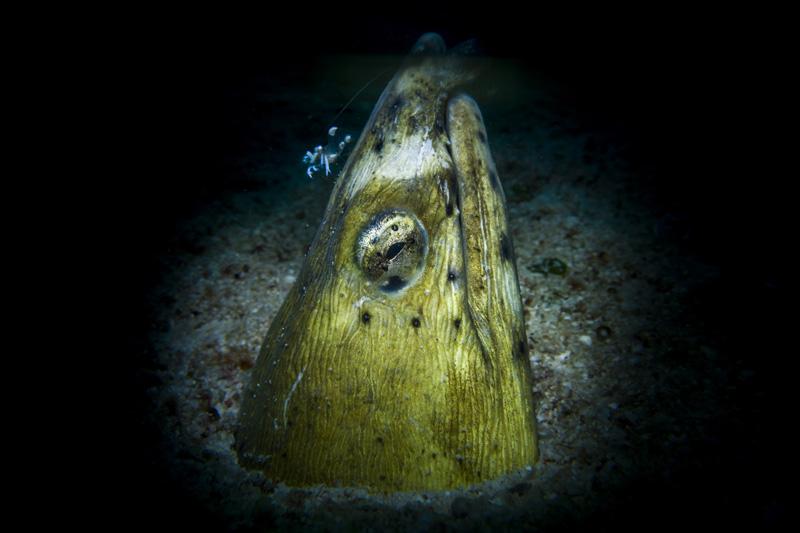 sealife underwater photography - dark lighting ocean photos