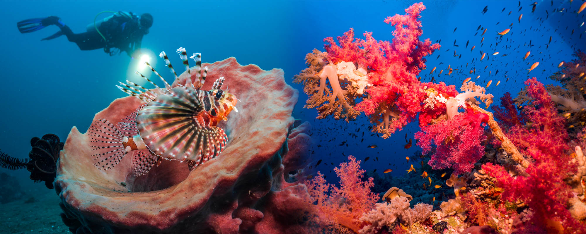 Ocean floor photography SeaLife Cameras