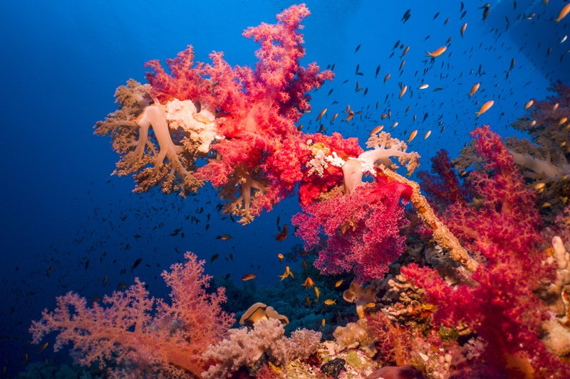 elphinstone reef red sea egypt underwater photos