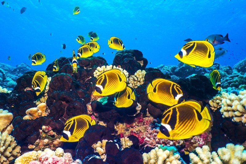 fish underwater photography rangiroa french polynesian sea