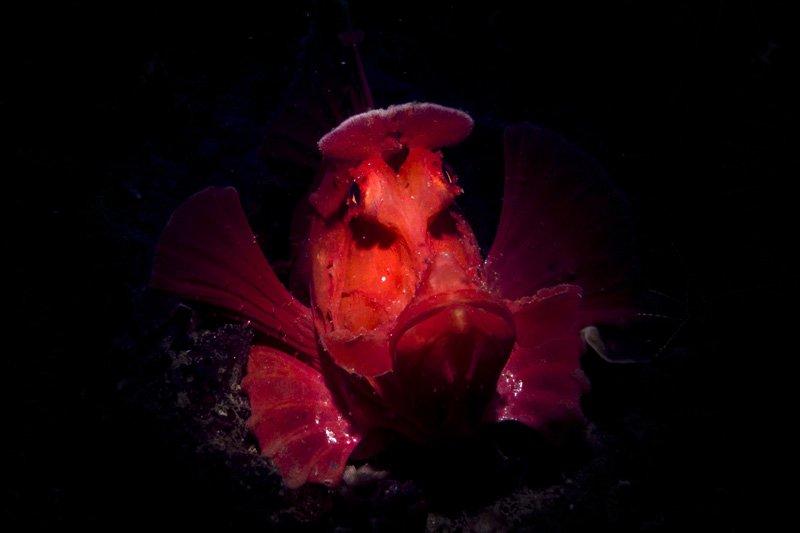 scorpionfish malapascua philippines underwater photo lighting guide