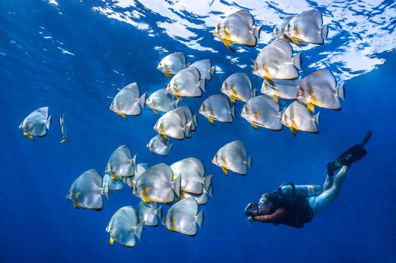schooling fish sharm el-seikh ehypt deep sea photography