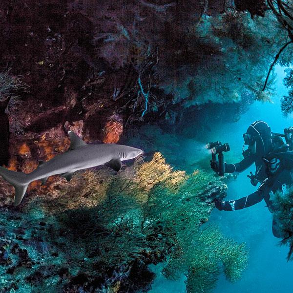 SeaLife Sea Dragon underwater lights