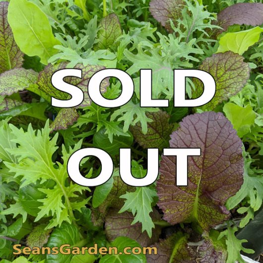 sold-out-salad