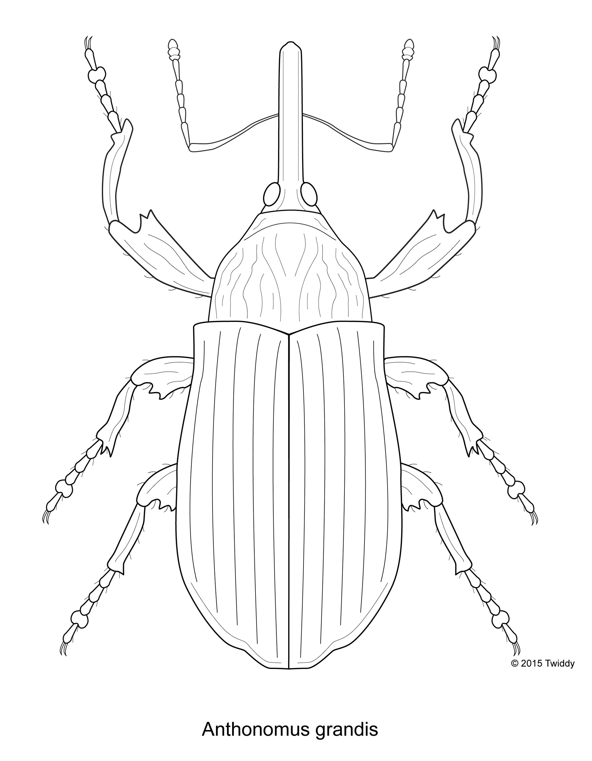 Boll Weevil Costume